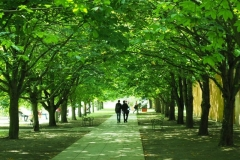 Uwe Ehrhardt: Gang ins Grüne