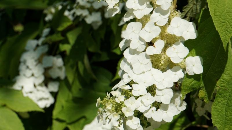 Botanischer-Garten-027-1024x576