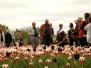 Tulpen über Tulpen 2017
