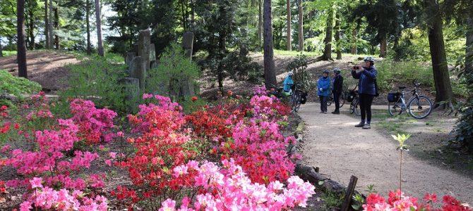 Ausflugstip: Rhododendronpark Kromlau