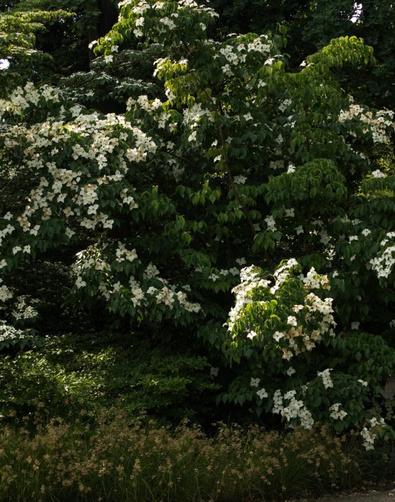 Strauch voller Blüten