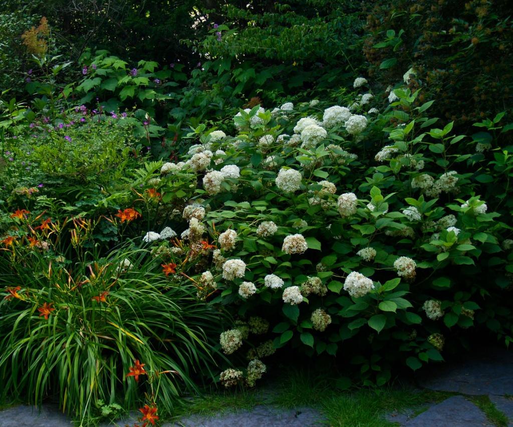 Schöner Kontrast: Hortensien und Taglilien